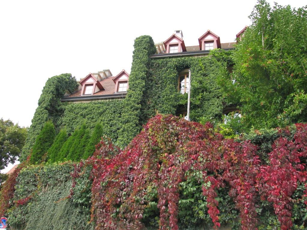 Пышная растительность на стенах домов Ротенбург-об-дер-Таубера