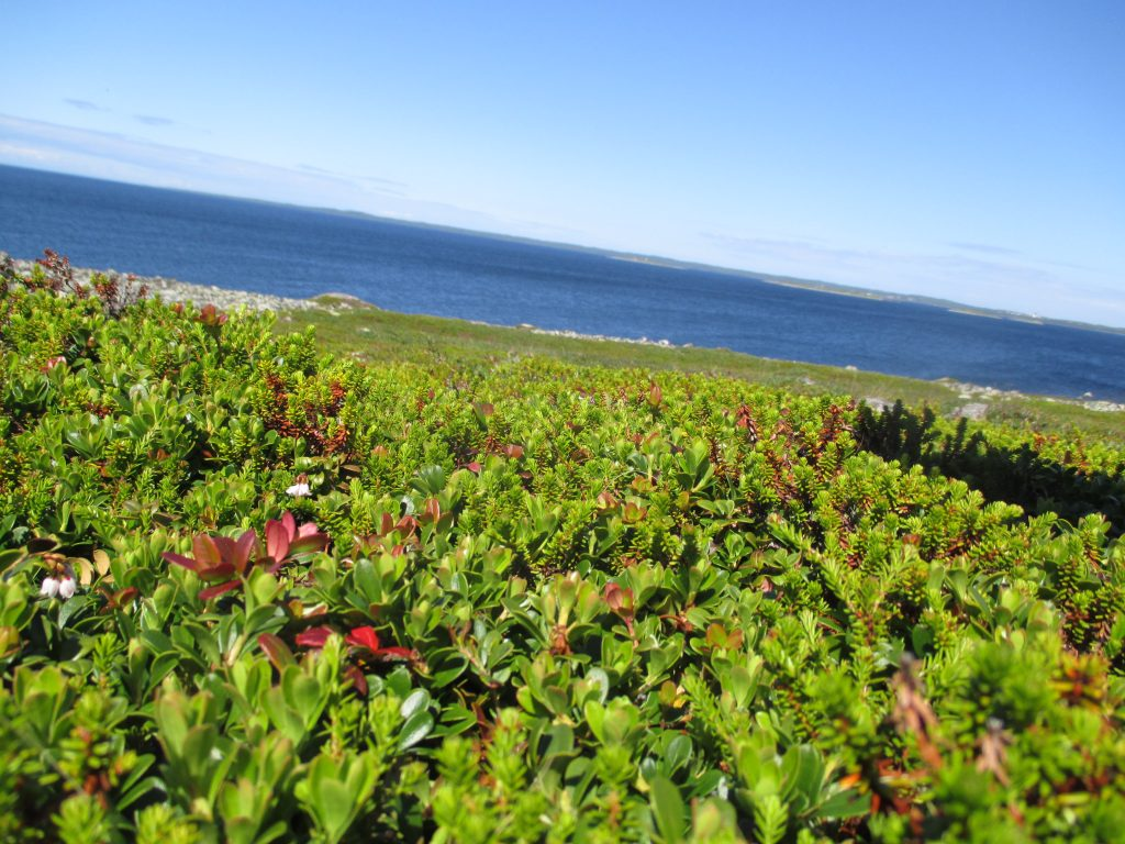 Уникальная растительность на острове Большой Заяцкий