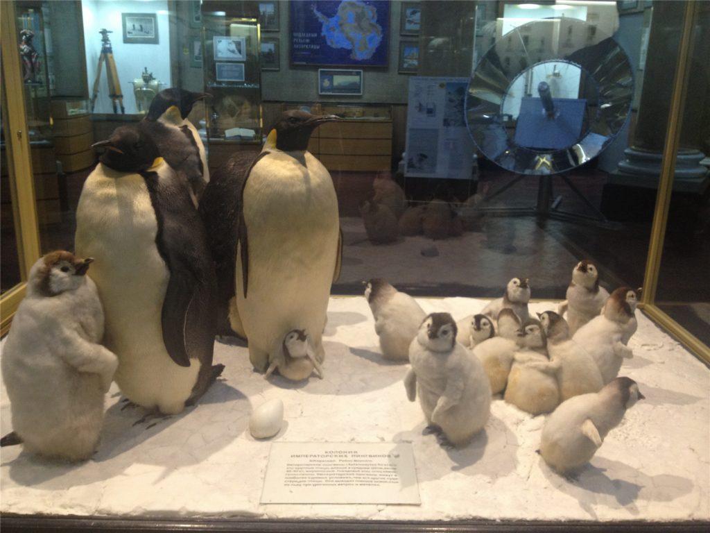 Музей Арктики и Антарктики в Санкт-Петербурге. Пингвины.