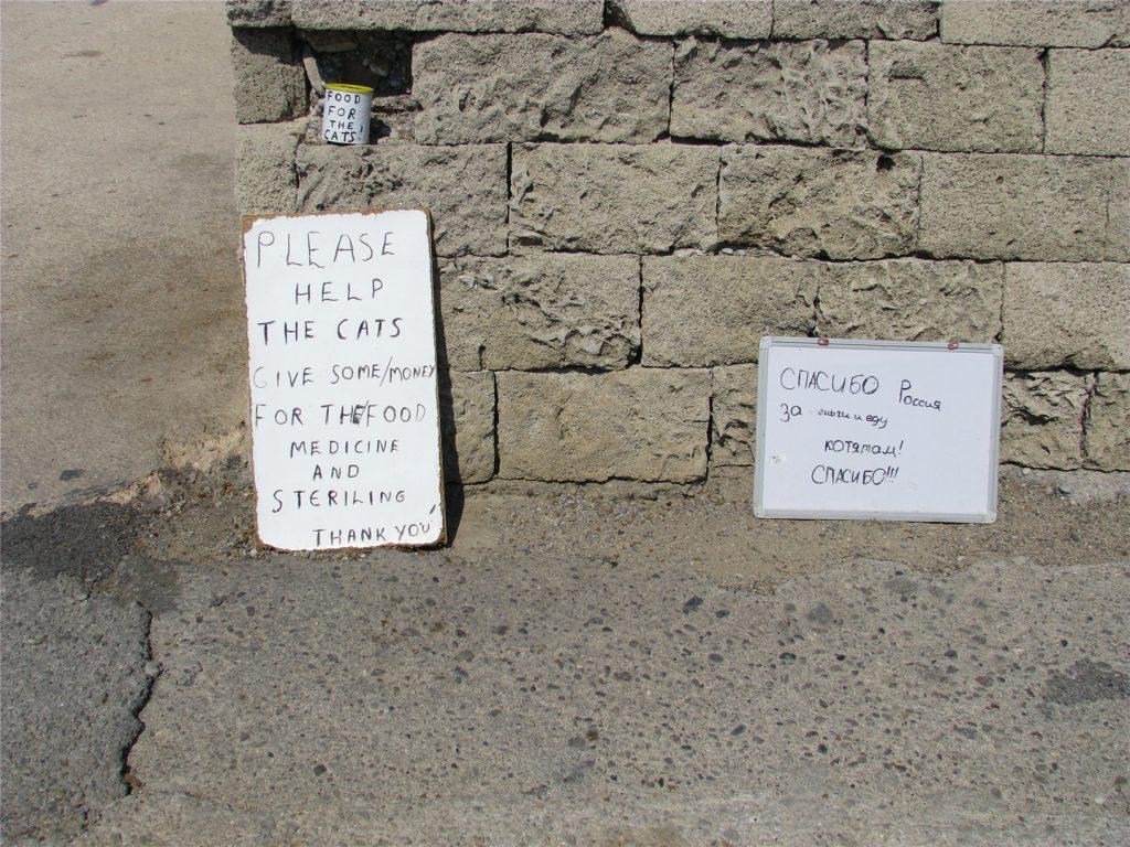 Таблички с призывом о помощи котятам. И на русском тоже!