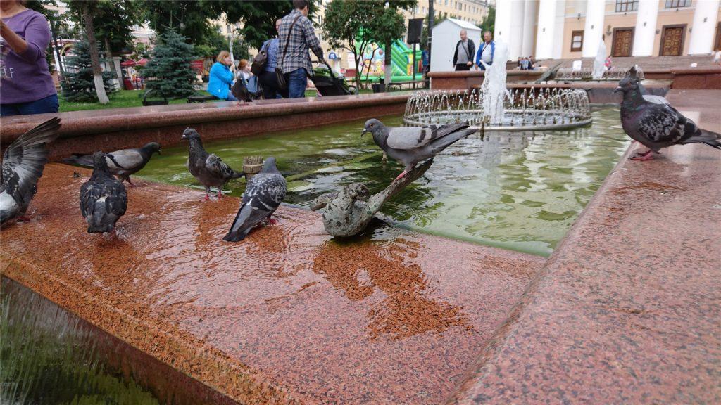 Голуби на фонтане в сквере Театральной площади