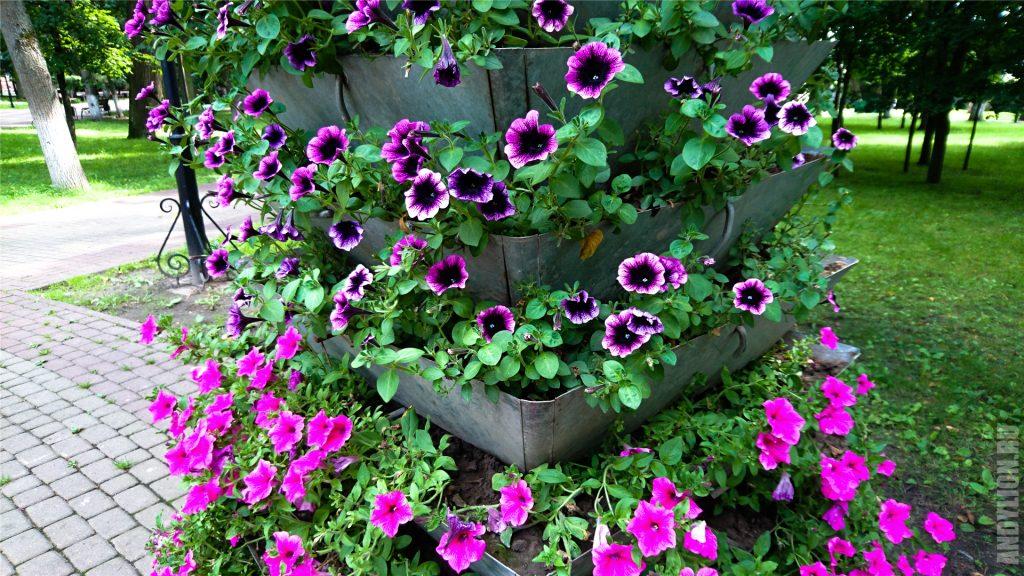 Калуга. Цветочки в парке Циолковского.