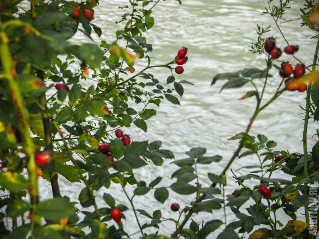 Река Инн и природа Инсбрука