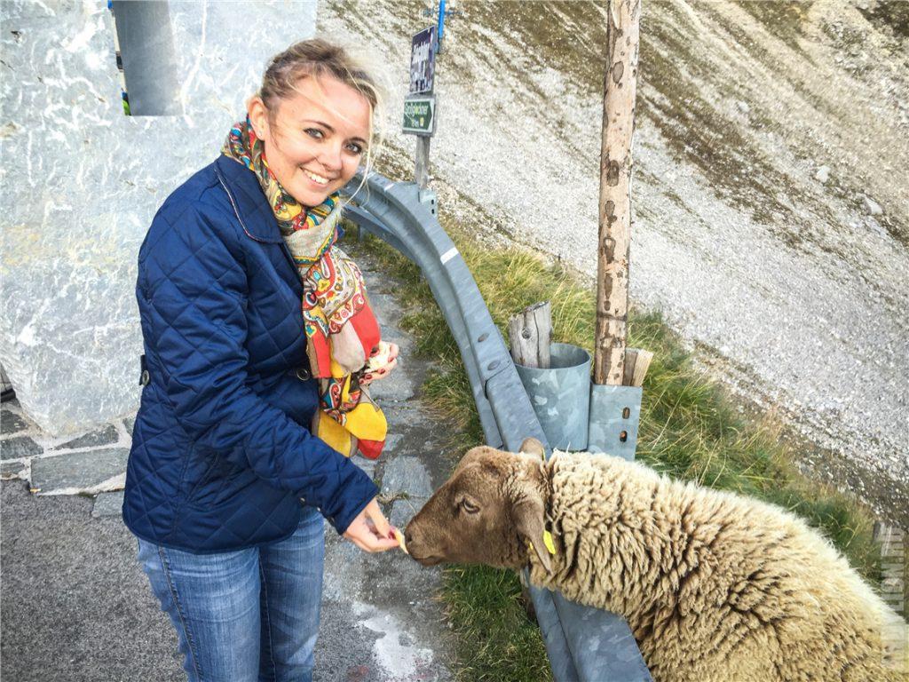 Аня кормит овечку на перевале Hochtor