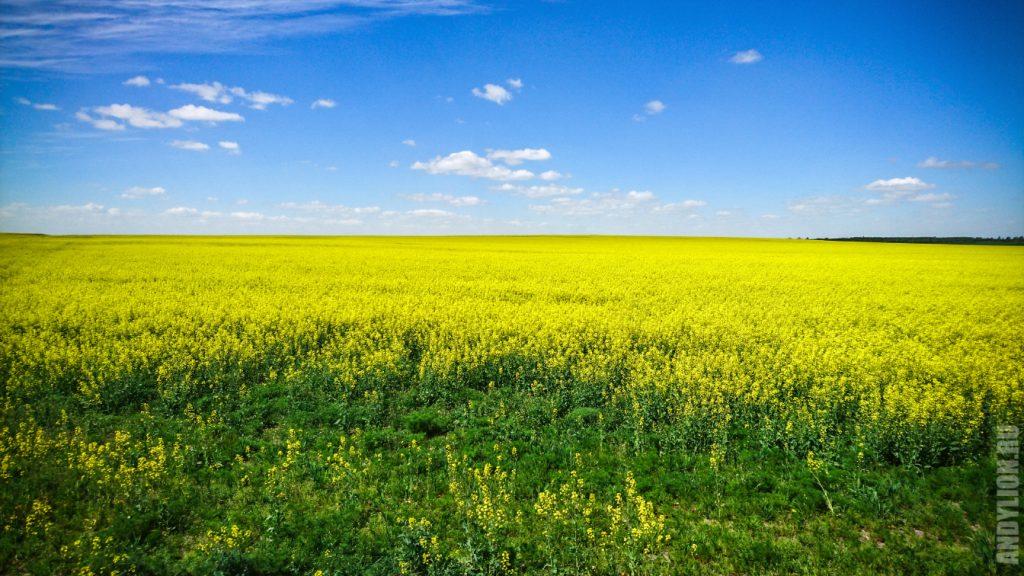 Бескрайние поля Беларуси