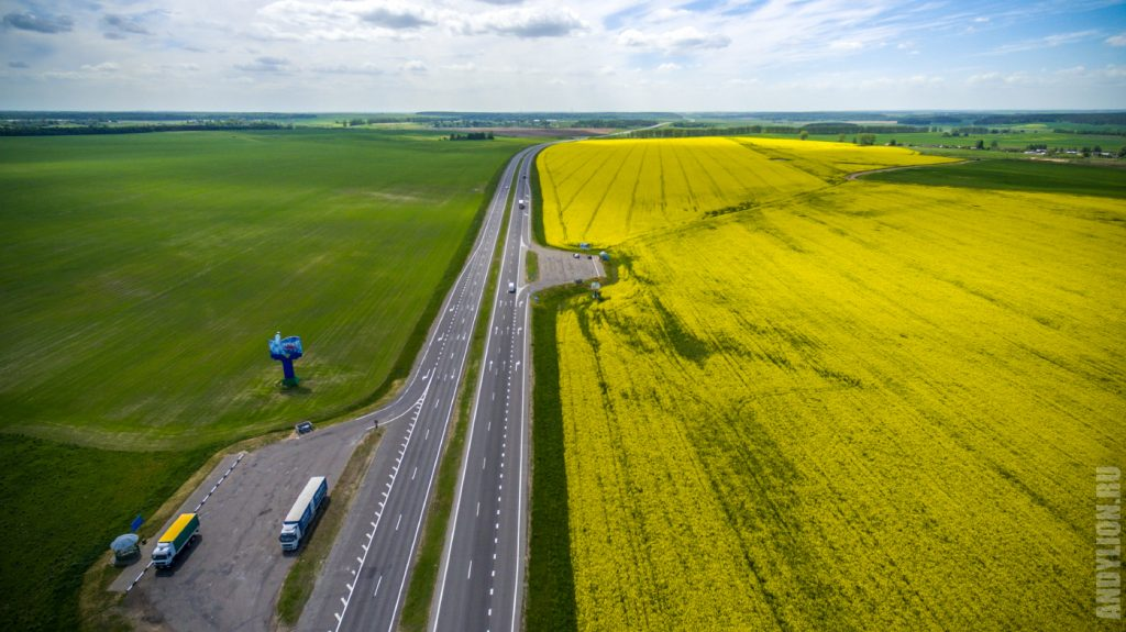Рапсовые поля и дорога