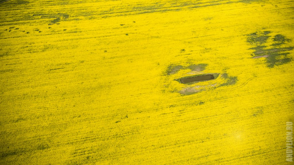 Бескрайнее желтое поле