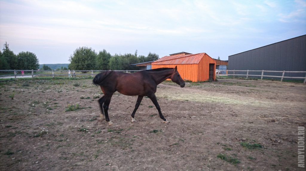 И еще лошадка. Гуляет в экопарке Ясно Поле.