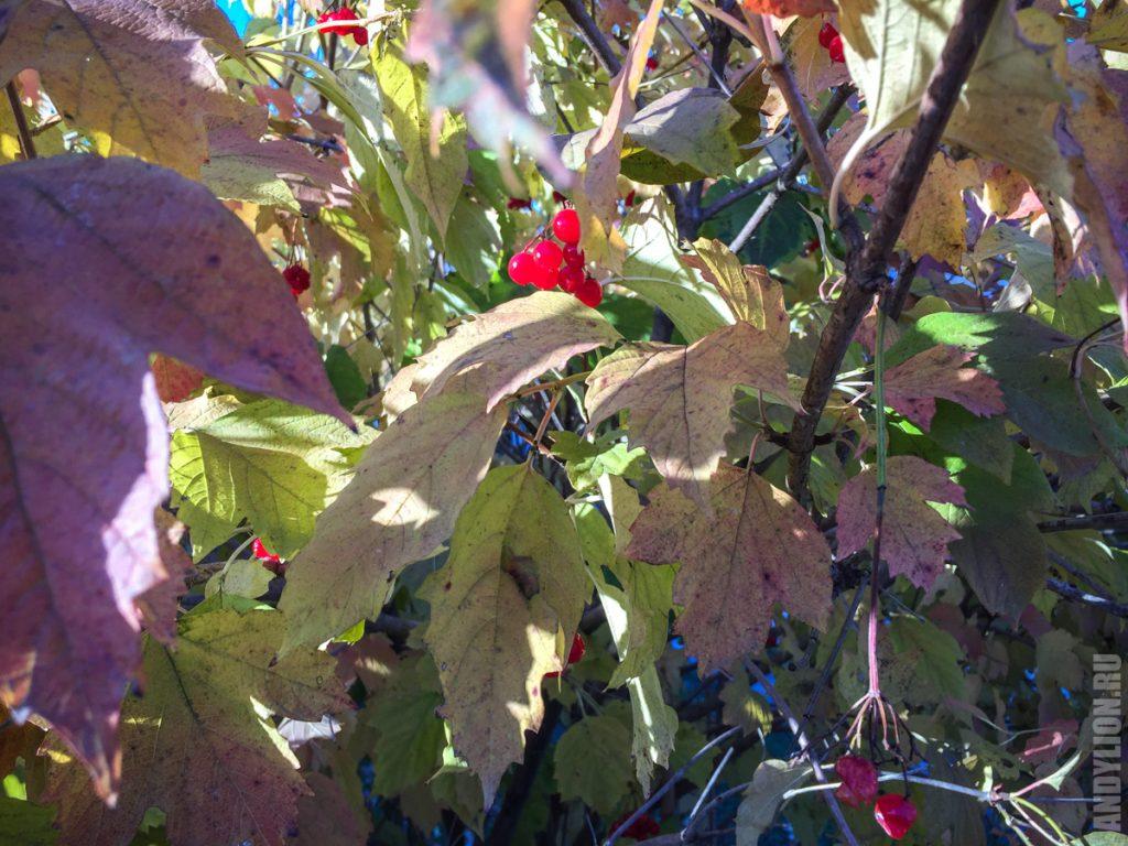 Осень в Тарусе