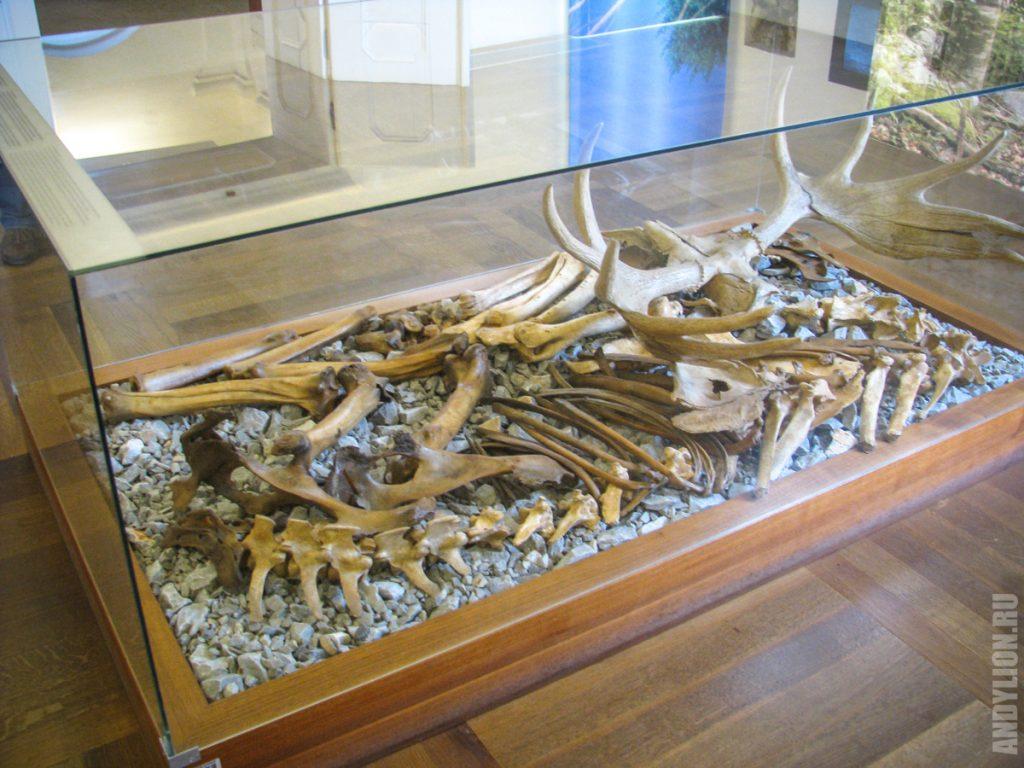 Музей замка Блед