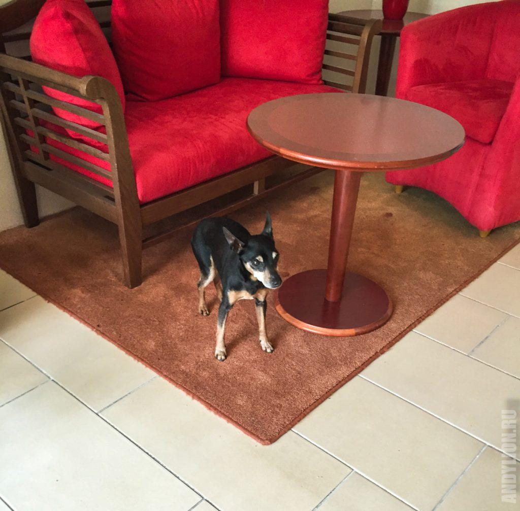 Потерявшаяся собачка