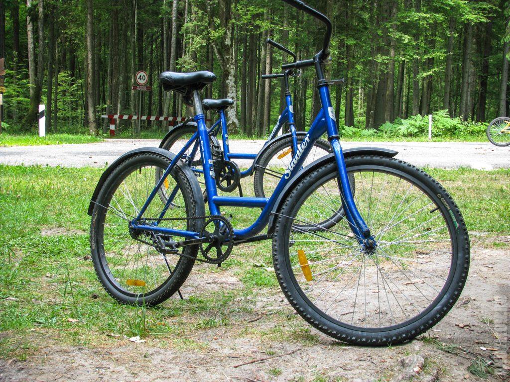 Велопрогулка по Беловежской Пуще
