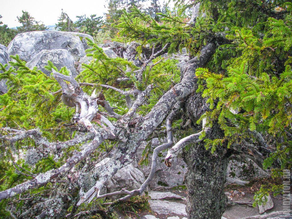 Замысловатые деревья