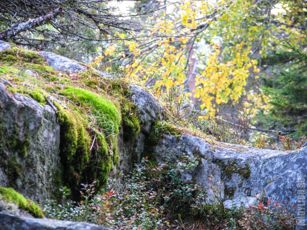 Камень. Мох. Осенняя листва.