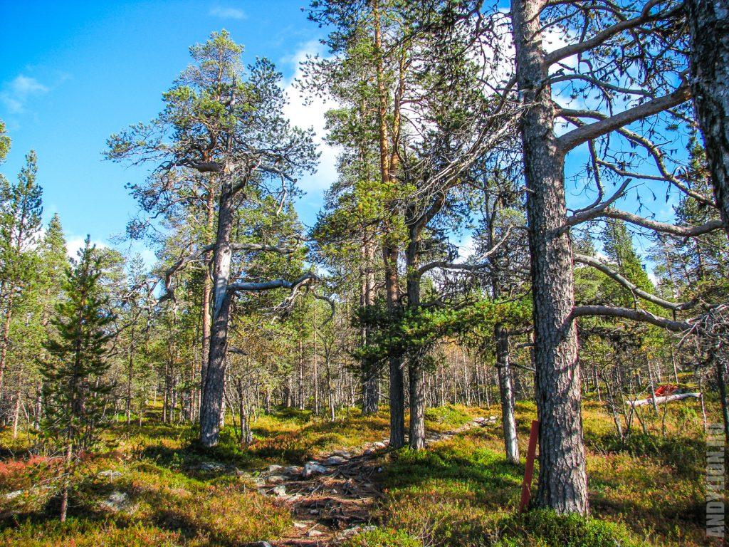 Лес на маршруте к вершине Оцамо