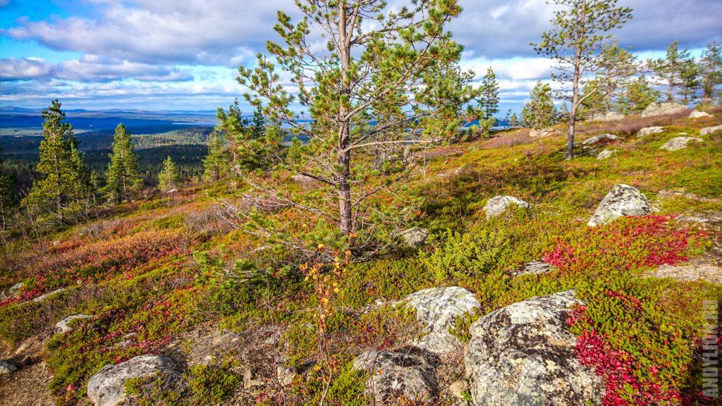 Склон с тундровой растительностью
