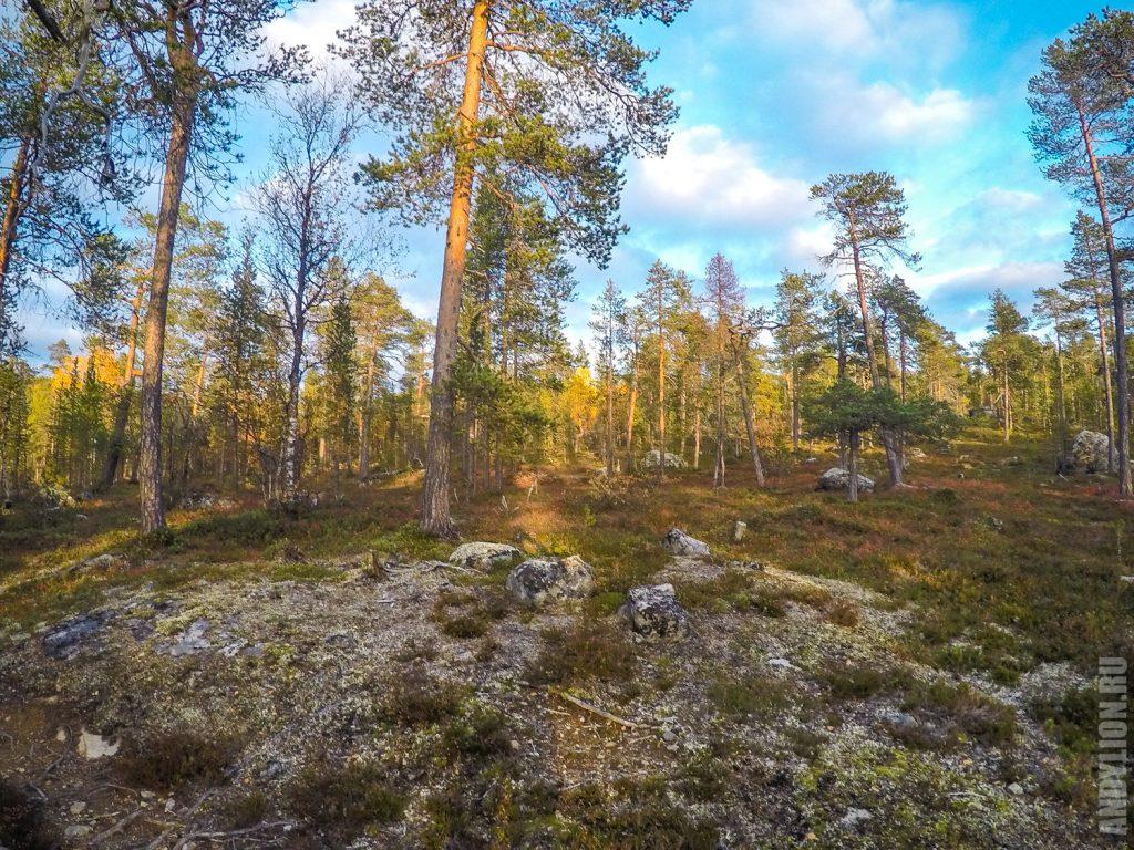 Лес в лучах заходящего солнца