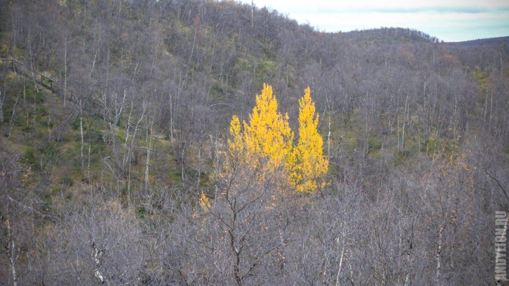 Одинокие желтые деревья