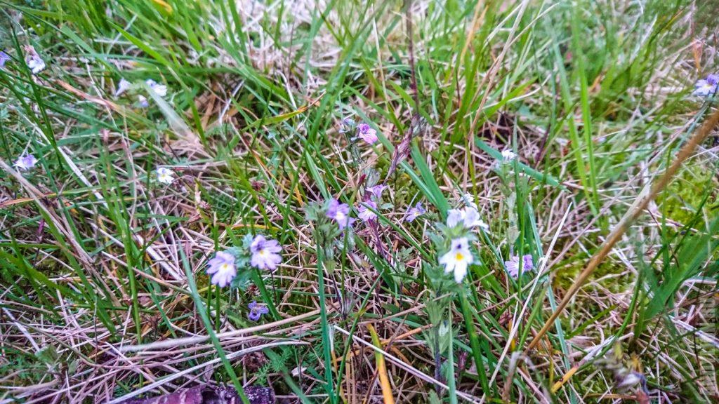 Цветы в суровой и северной Норвегии