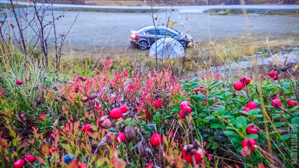 Северные ягоды и палатка