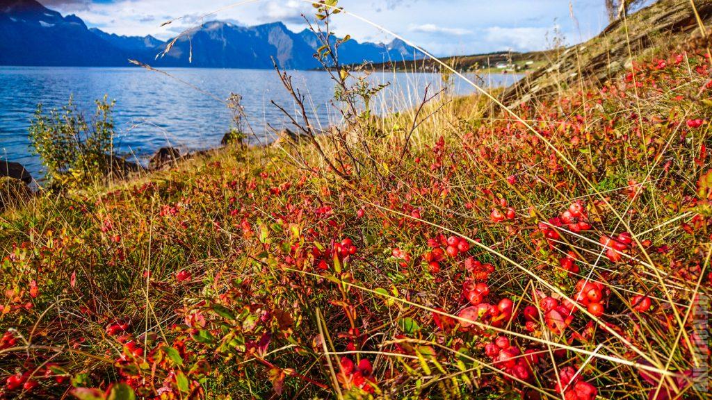 Осенняя флора Норвегии