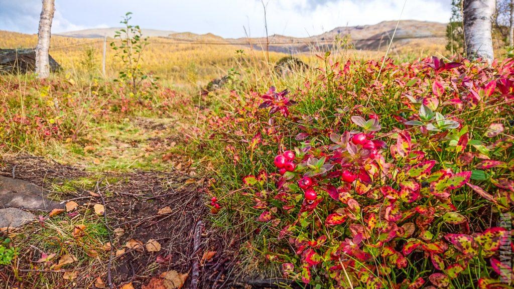 Осенние растения Норвегии