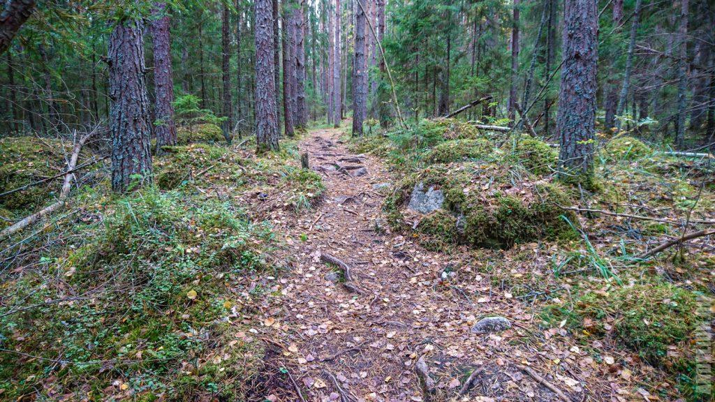 Пешеходная тропа в лесах Реповеси